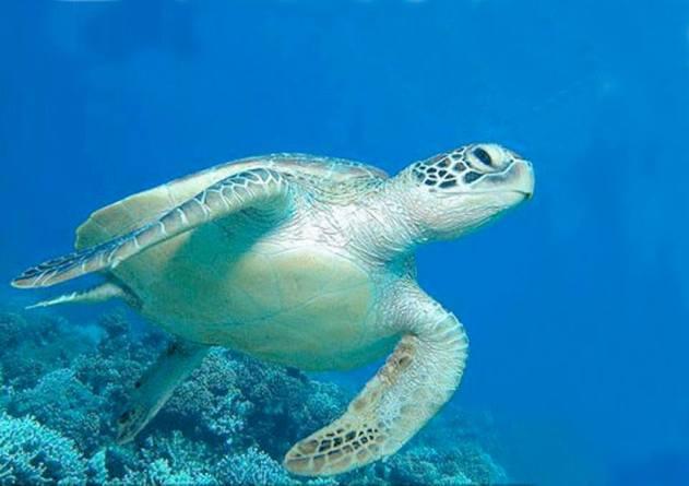 Manoa Tours Turtle Tours