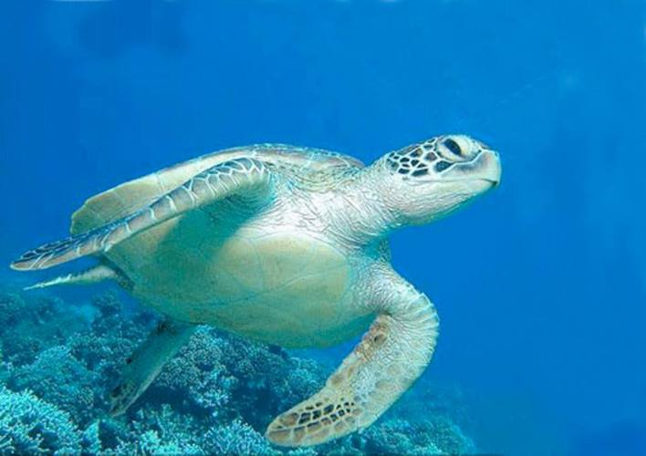 Manoa Tours Turtle Tours