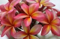 Flowers Hike Samoa, Manoa Tours, Surf Samoa