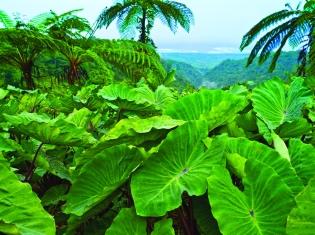 Hike Samoa, Manoa Tours Samoa